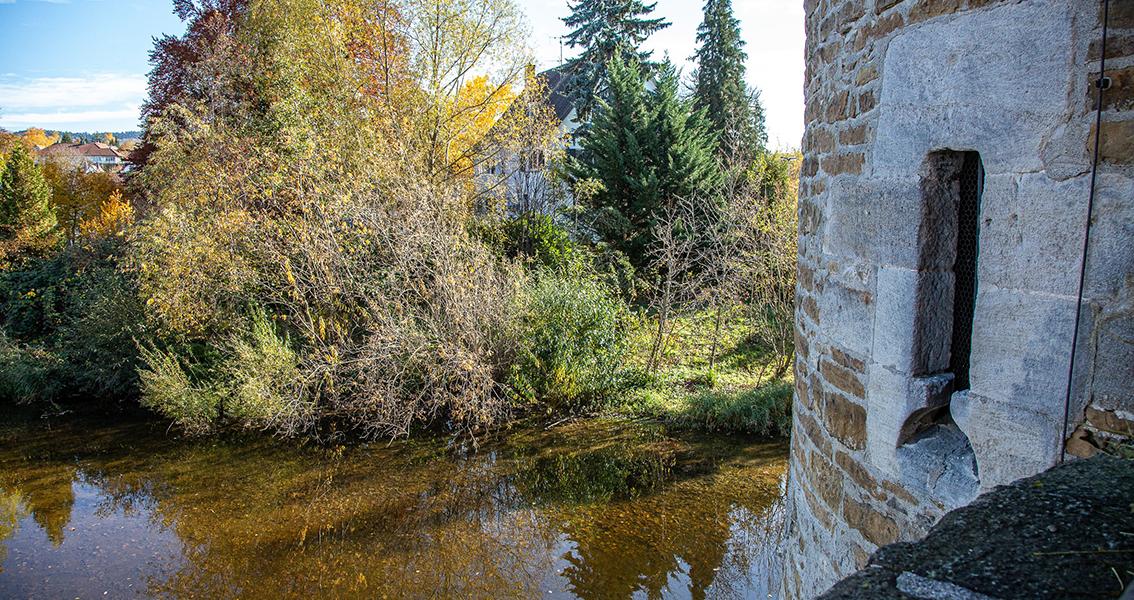 Gewässer mit dicht bewachsenem Ufer