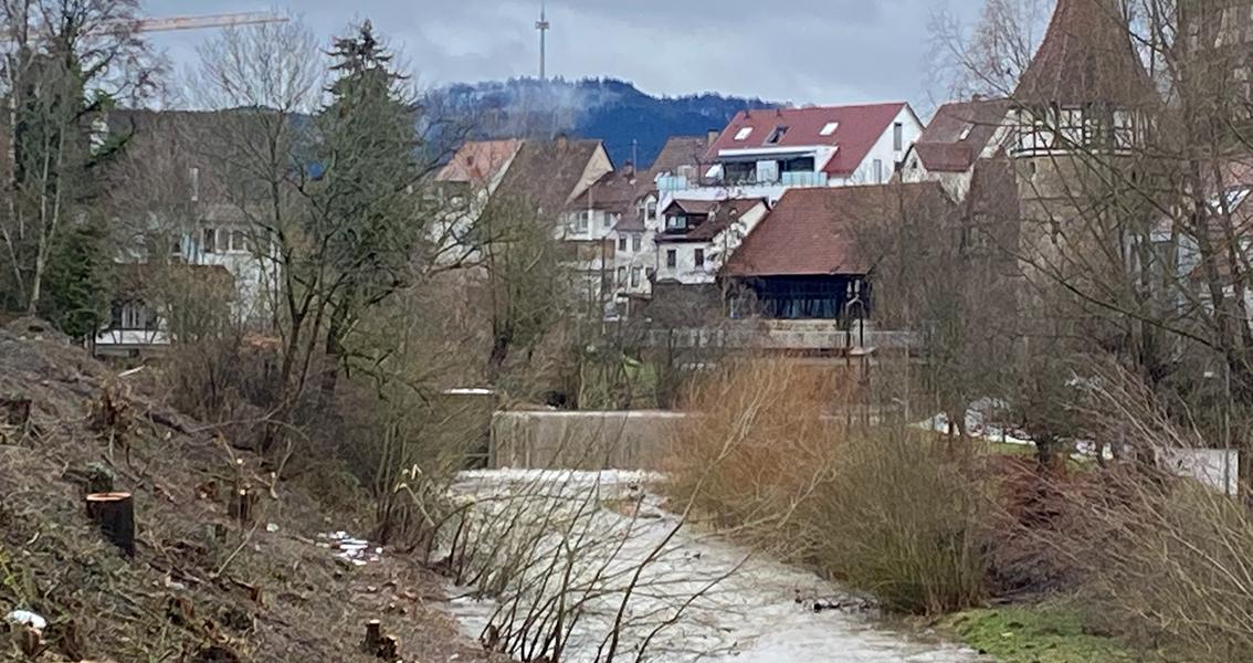 Abgeholztes Eyach-Ufer